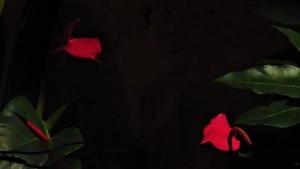 http://www.opcionfoto.com/files/gimgs/th-25_opcion-foto-juan-pablo-landinez-h2-01.jpg